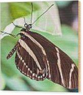 Zebra Iv Wood Print