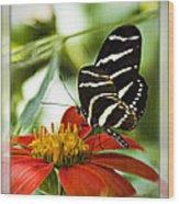 Zebra Longwing 2 Wood Print