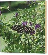 Zebra Longwing Butterfly On Flower Wood Print