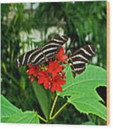 Zebra Longwing Ins 39 Wood Print