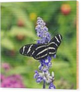 Zebra Longwing Wood Print by Laurie Perry