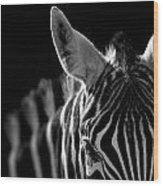 Portrait Of Zebra In Black And White Wood Print