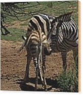 Zebra Mother And Foal Wood Print by Graham Palmer
