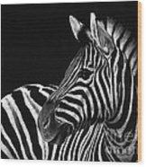 Zebra No. 3 Wood Print