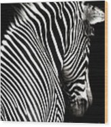 Zebra On Black Wood Print