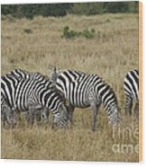 Zebra On Masai Mara Plains Wood Print