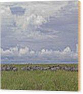 Zebra Panorama - 12x64 Wood Print