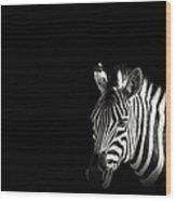 Zebra Portrait In Black Background Wood Print