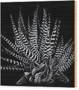 Zebra Succulent Wood Print