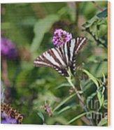 Zebra Swallowtail Butterfly In Garden Wood Print