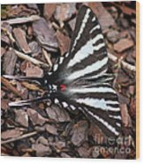 Zebra Swallowtail Butterfly Square Wood Print
