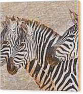Zebras 5236b Wood Print