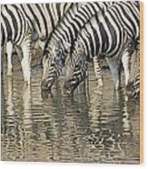 Zebras At Water Hole Wood Print
