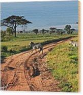 Zebras Cross The Road Wood Print