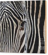 Zebras Face To Face Wood Print