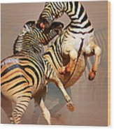Zebras Fighting Wood Print