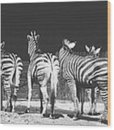 Zebras From Behind Wood Print