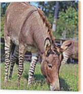 Zedonk Or Zebroid Wood Print