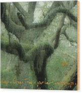Zen Forest Wood Print