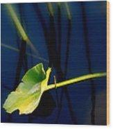 Zen Photography V Wood Print
