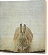 Zen Rabbit  Wood Print