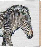 Zephyrus Zebra IIi Wood Print