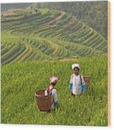 Zhuang Minority Women Walk Through Rice Wood Print