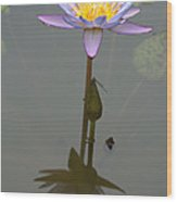 Zilker Botanical Park - Water Lily Wood Print