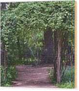 Zilker Botanical Tree Arbor Wood Print