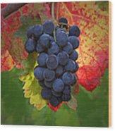 Zinfandel Grapes Wood Print