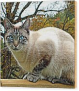 Zing The Cat In The Fall Wood Print