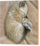 Zing The Kitten Wood Print