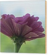 Zinnia Dream Wood Print