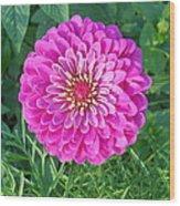 Zinnia - Pink Wood Print