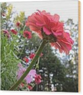 Zinnia Side View Wood Print