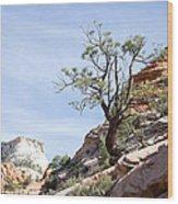 Zion National Park 1 Wood Print