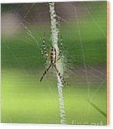 Zipper Spider Wood Print
