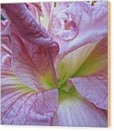Zona Rosa Daylily Wood Print