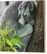 Zoo Life 2011.no.3  Wood Print
