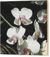 Zoo Orchid Wood Print