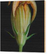 Zucchini Jester Wood Print