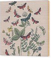 Zygaenidae - Syntomidae Wood Print
