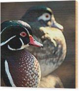 A Couple Of Wood Ducks Wood Print