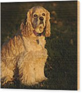 American Cocker Spaniel Wood Print