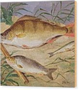 An Angler's Catch Of Coarse Fish Wood Print