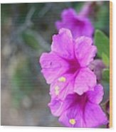 Arizona Wildflower Wood Print by Sharon Mick