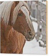 Belgian Horse Lord Wood Print