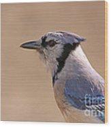 Blue Jay Posing Wood Print by David Cutts