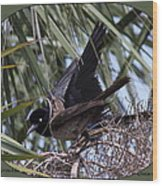 Boat-tailed Grackle - Quiscalus Major Wood Print