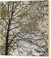 Branch Of Tree In Autumn Wood Print